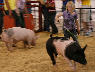 News And Events Of Our Local Ffa Chapter At Chillicothe